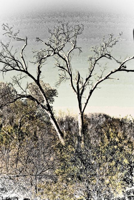 arizona-tree-120071012.jpg