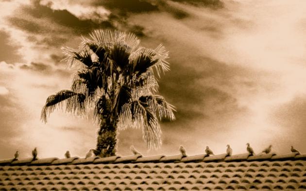 solarize-doves-1.jpg