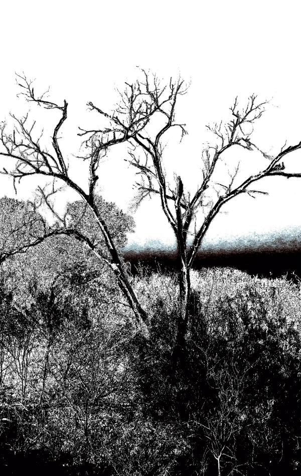 grufftree.jpg