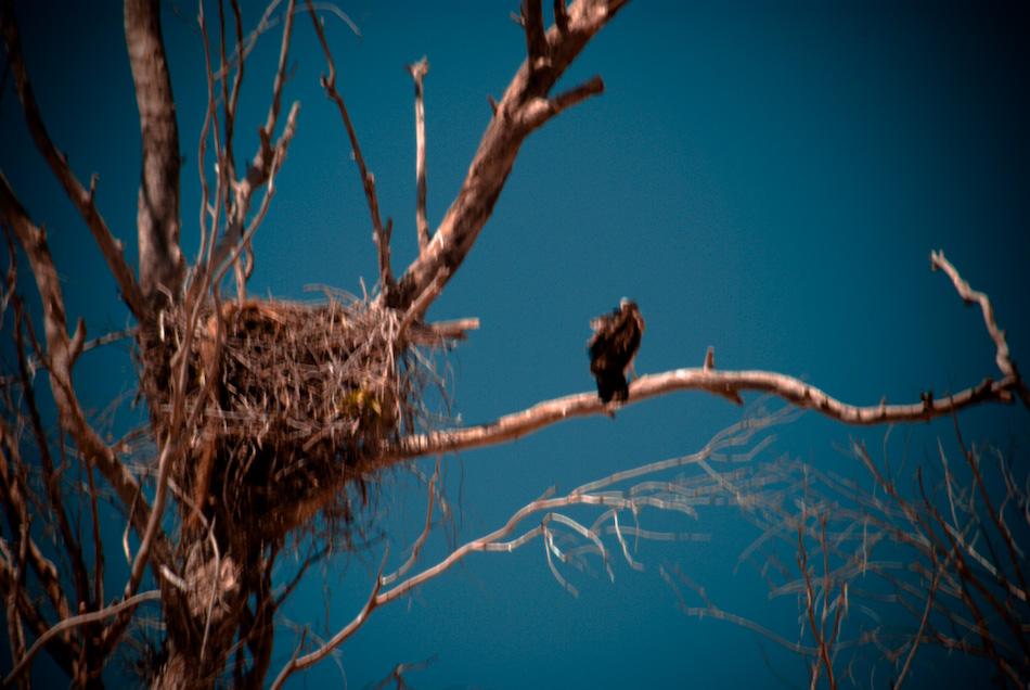 baby hawk...-120080526.jpg