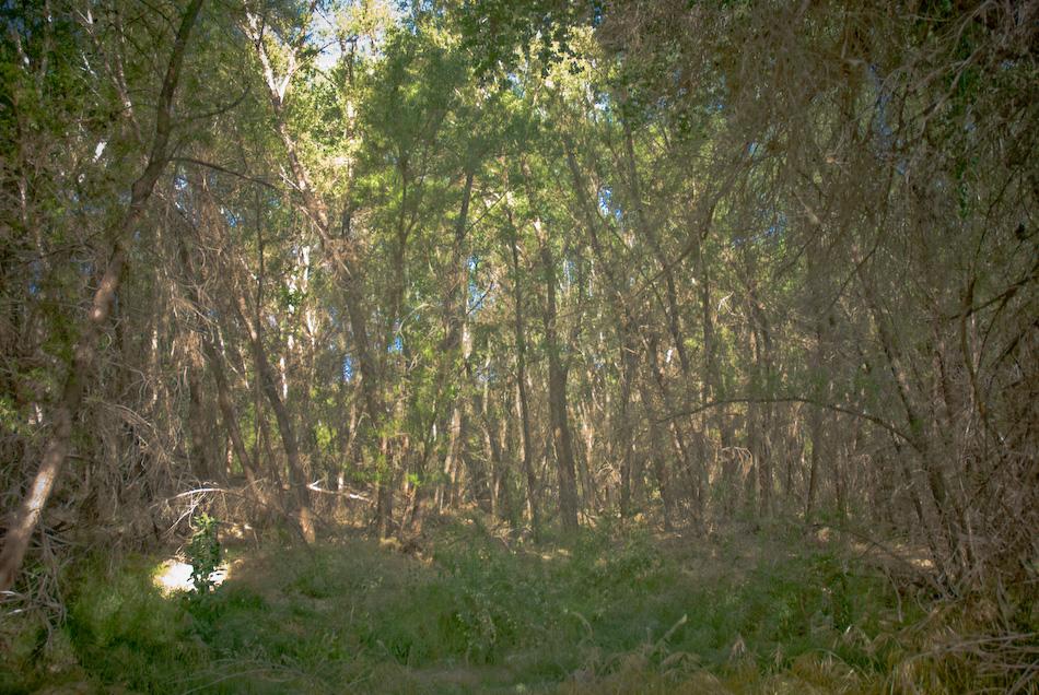 dark forest...-120080424.jpg