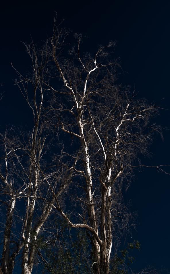 colonnade tree 2..-120080601.jpg