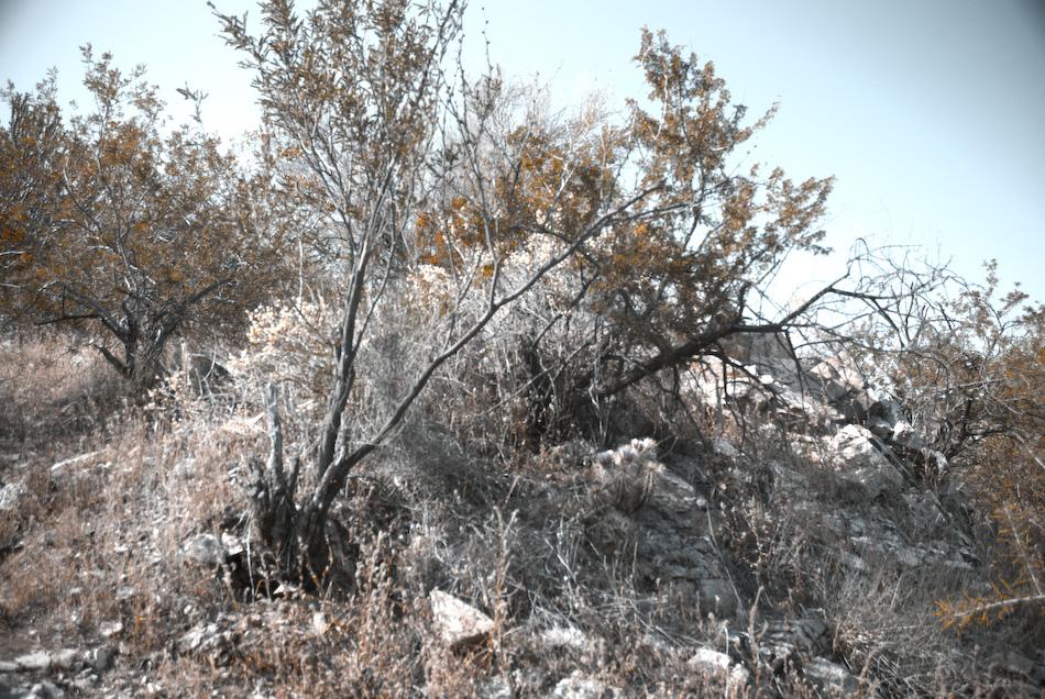 desert pastel-120080424.jpg