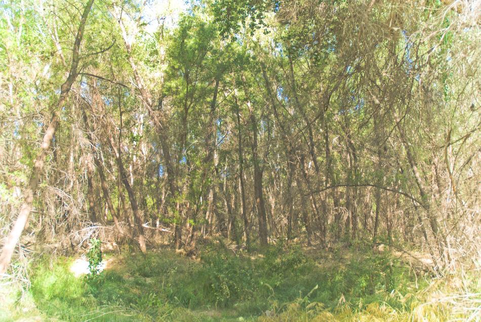 woods-120080424.jpg