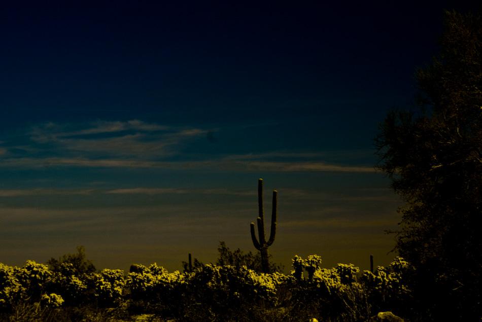 arizona cactus...-120080404.jpg