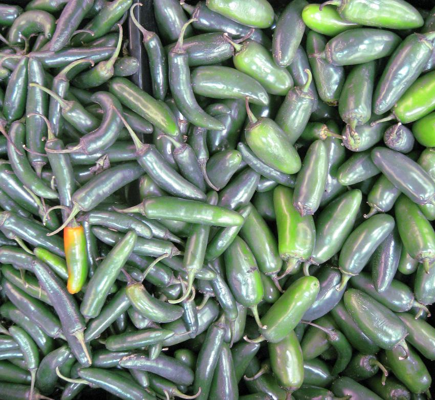 chilies...-120080703.jpg