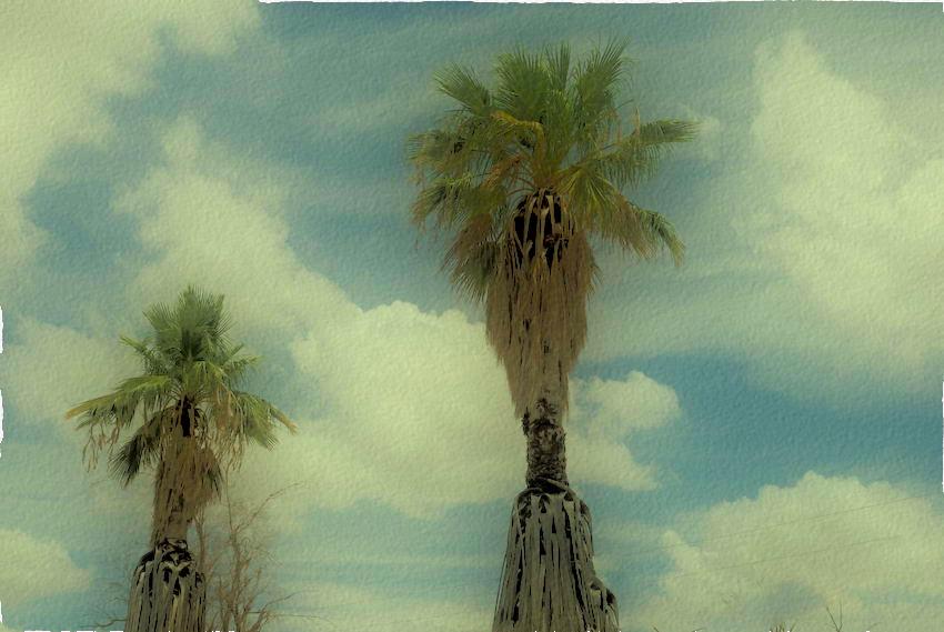 palm for nx-120080719.jpg