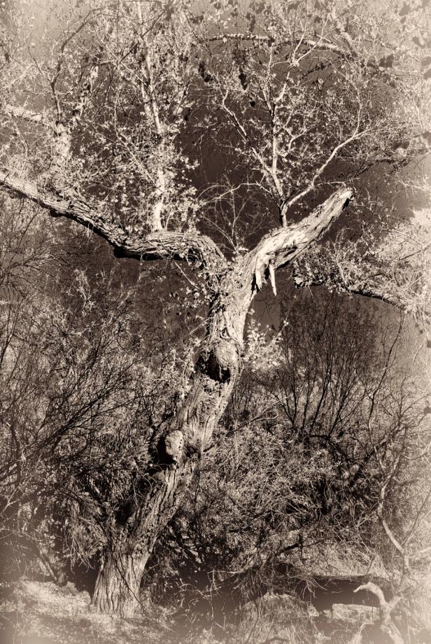 gentle tree.jpg