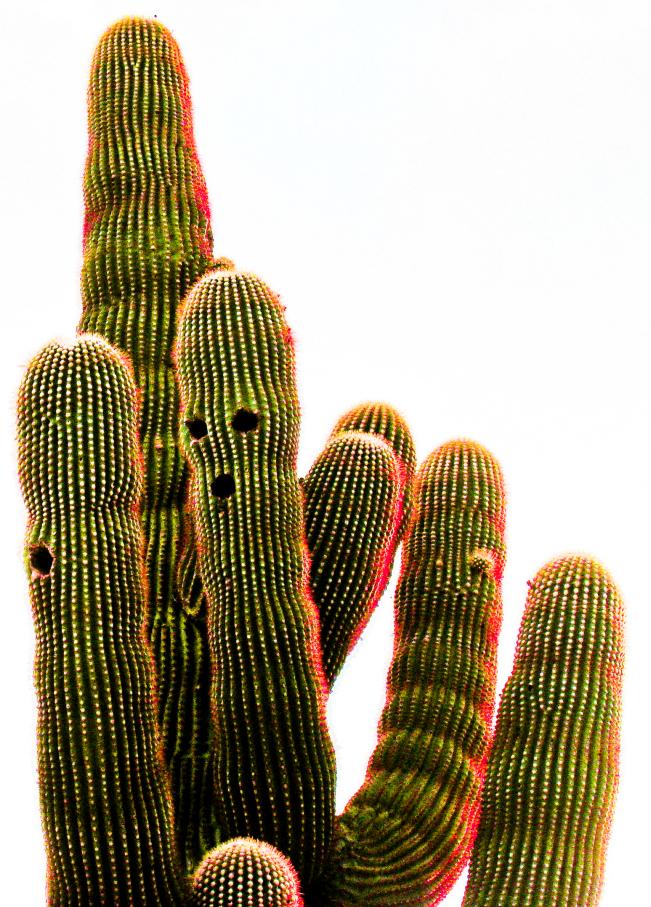 the saguaro gang...-1.jpg