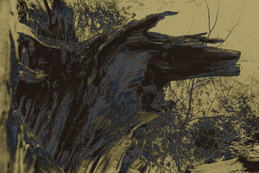 wolf...-120080424.jpg