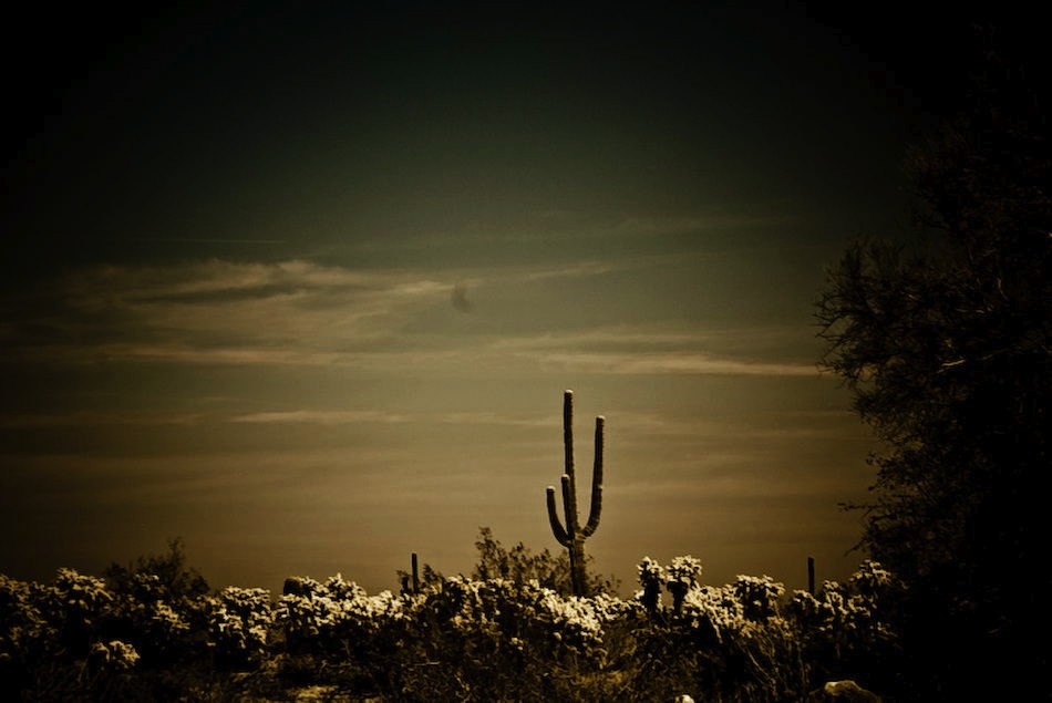 desert dream...-120080404.jpg
