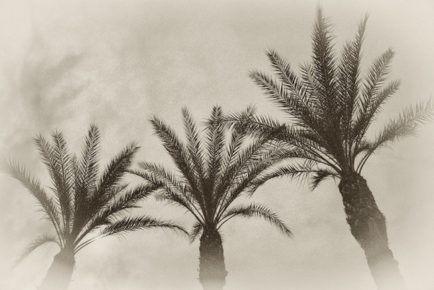3-palms-in-colonnade-120081003