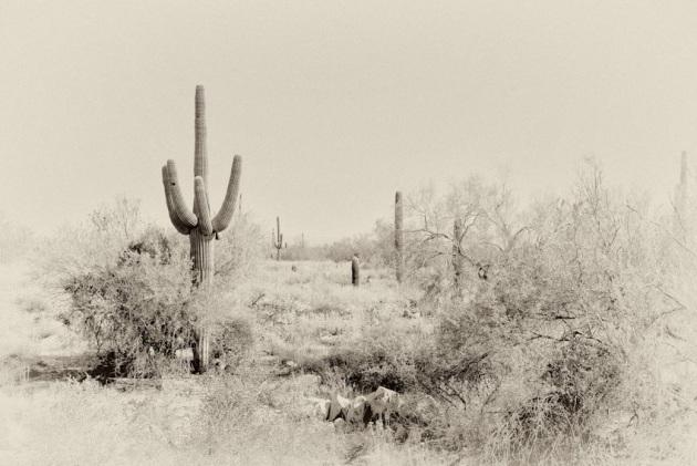christmas-in-the-arizona-desert-120080827
