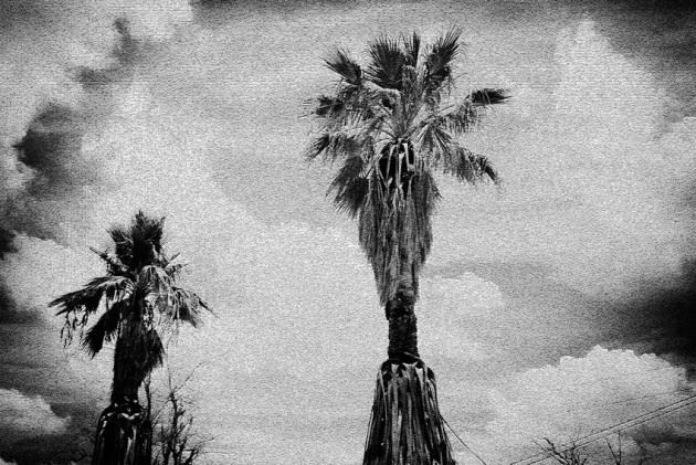 palms-120080719