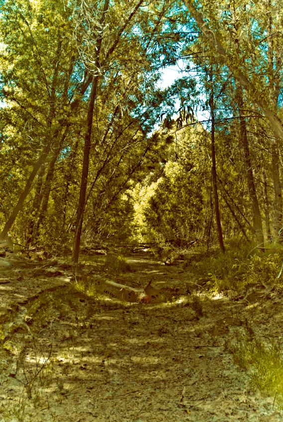 path-120080424