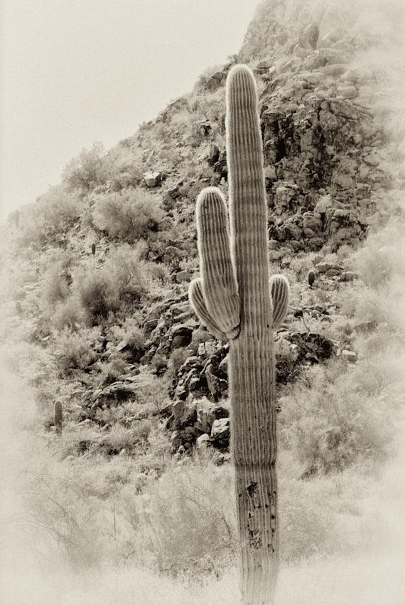 saguaro-120070225