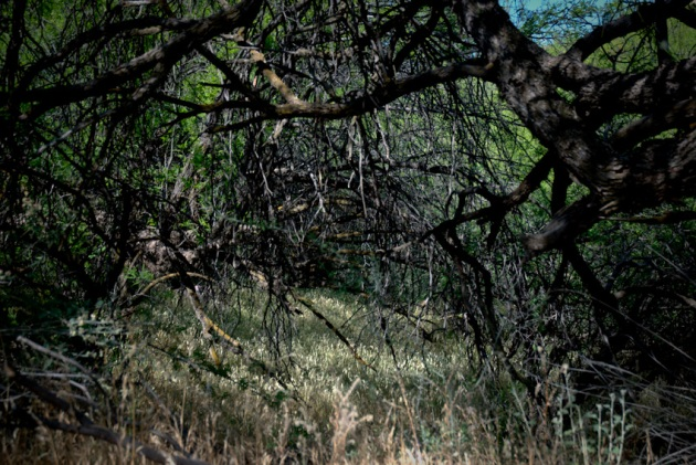 thicket-120080424