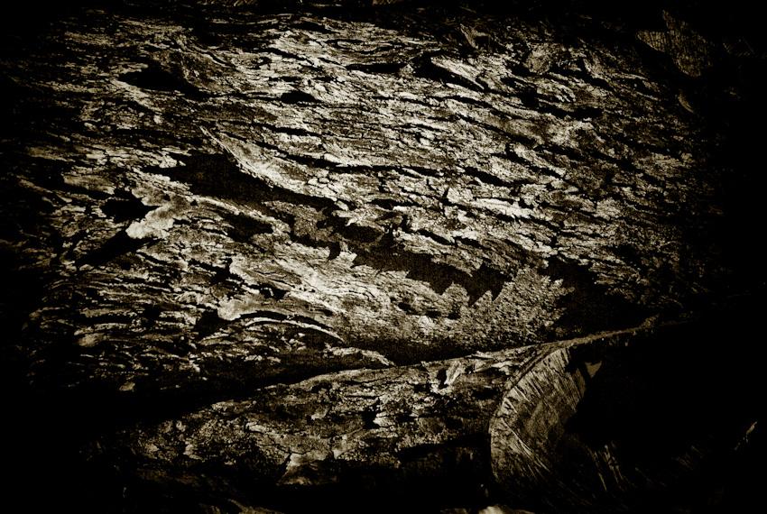 bark 2-120080821.jpg