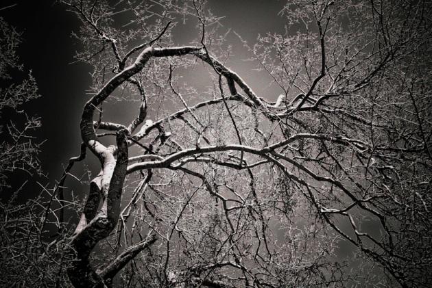 late-winter-120090121