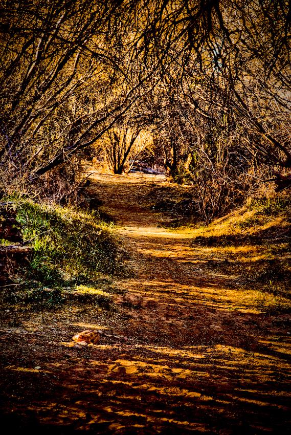 path-1200710171