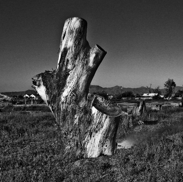 stump-120080407